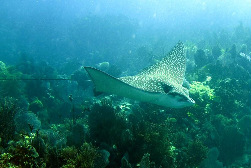 koralrev med fisk
